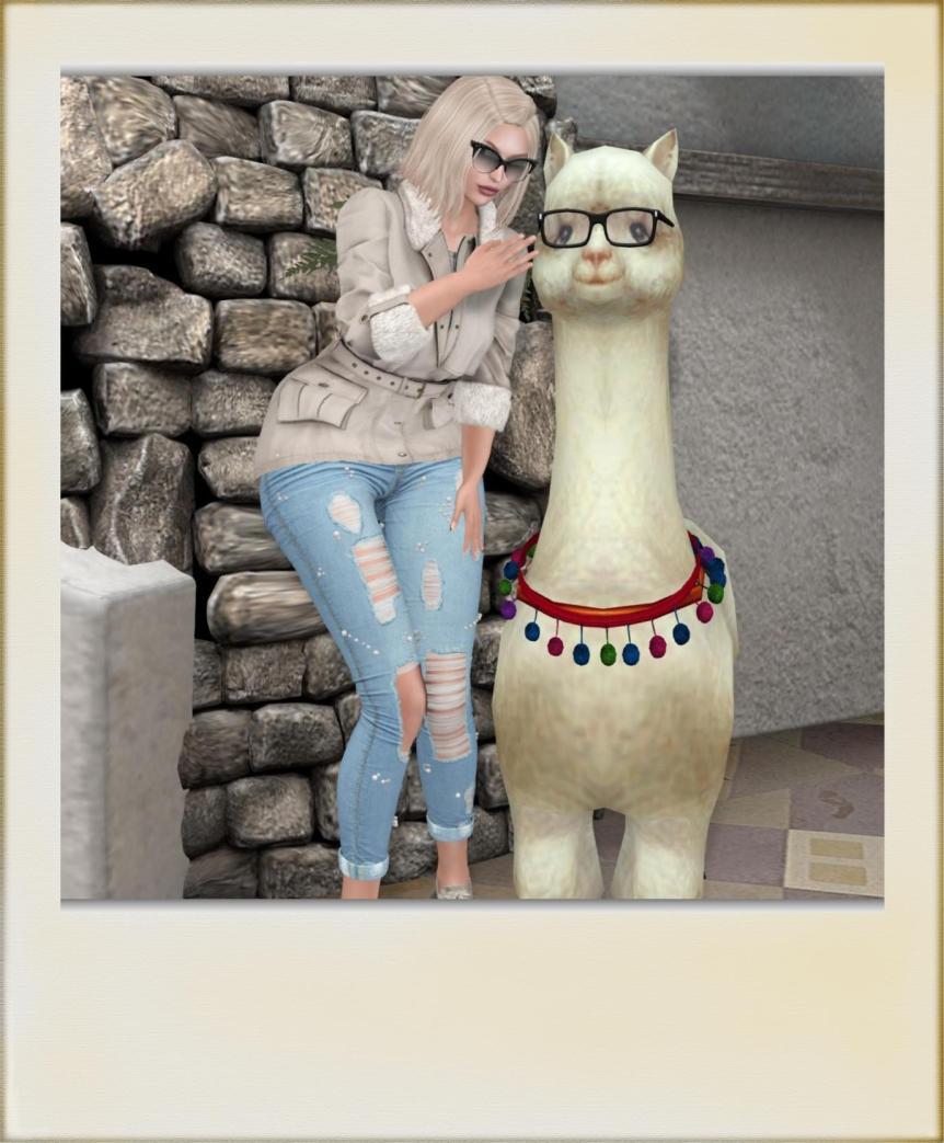 alpaca love6 (1)